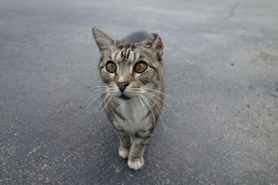 kingwood_floppy-the-cat_2